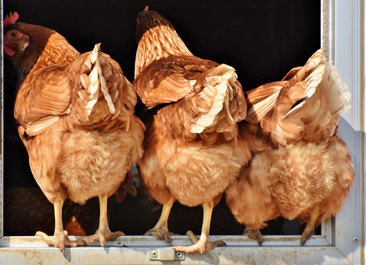 Использование фитобиотиков в птицеводстве (Антонио Мартинес Санчес)