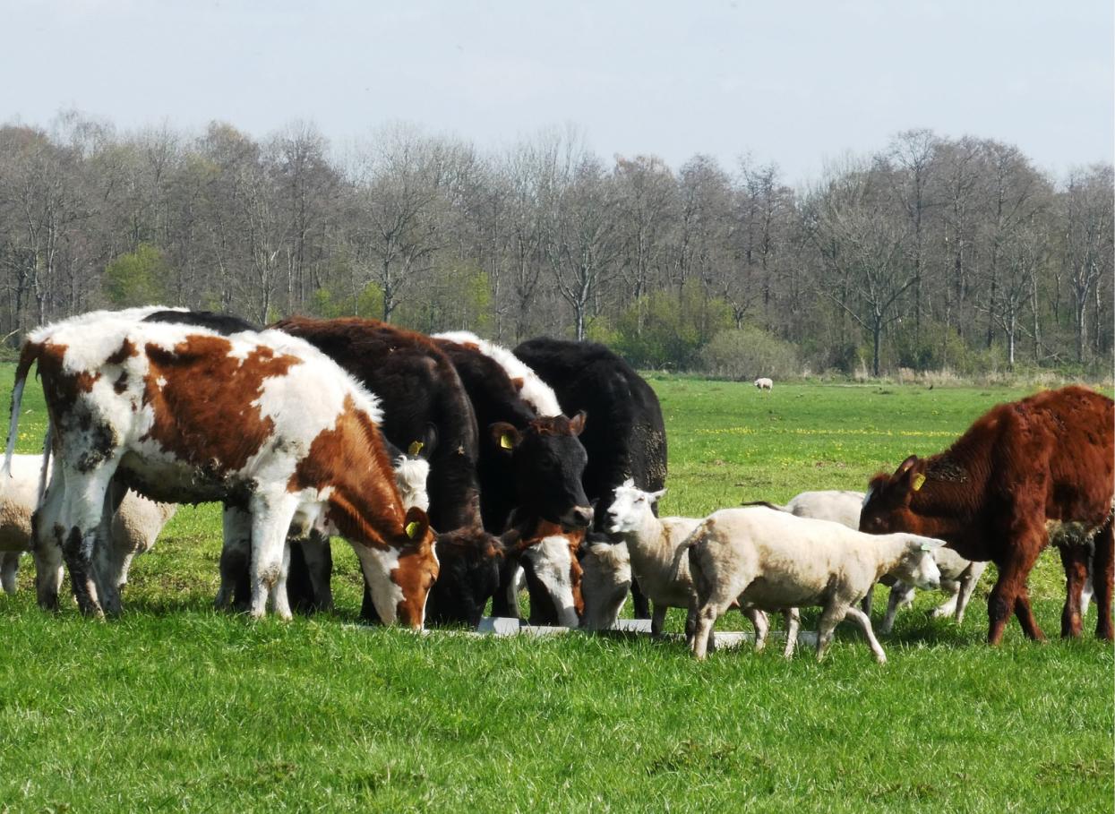 Роль хелатов в животноводстве и птицеводстве